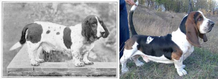 Как, в результате селекции, изменились некоторые породы собак (8 фото)