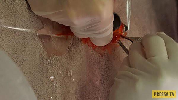 Семья заплатила 250$ чтобы спасти свою 20 летнюю золотую рыбку (8 фото)