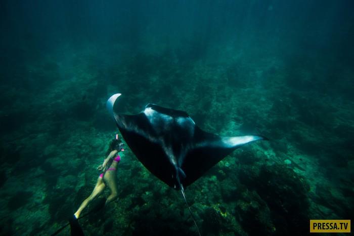 Смелая американка плавает с огромными скатами (16 фото)