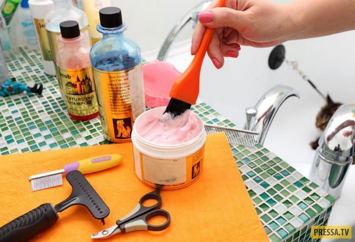 Как правильно помыть кошку и не пострадать самому (21 фото)