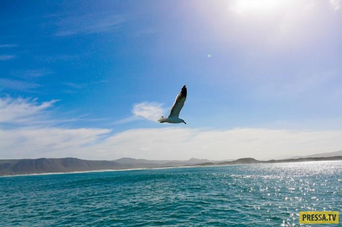ЮАР. Морская прогулка и купание с акулами (19 фото)