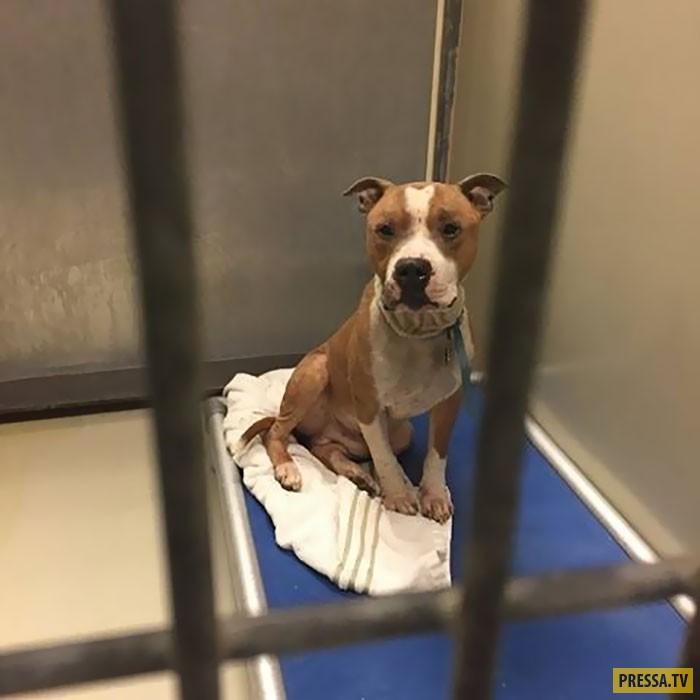 Спасённая из приюта собака не перестаёт обнимать хозяйку (11 фото)