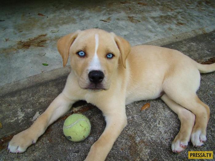 Интересные помеси собак (13 фото)