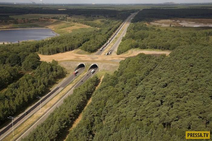 Удивительные мосты, ежегодно сберегающие жизни тысячам животных (24 фото)
