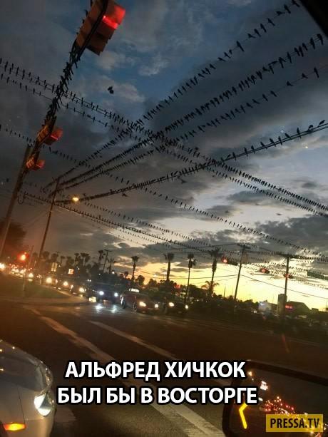 Прикольные картинки с надписями (46 фото)