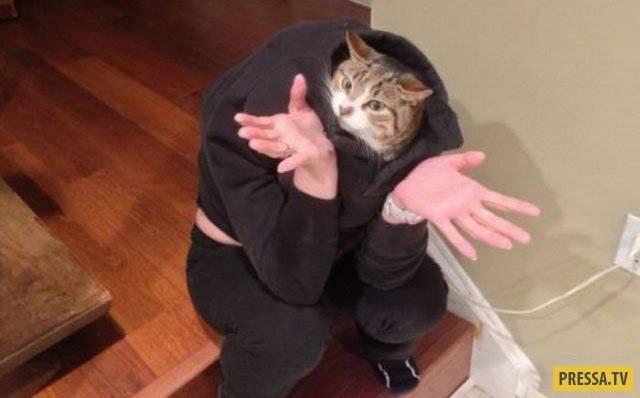 Помогите! Мой хозяин - идиот! (52 фото)