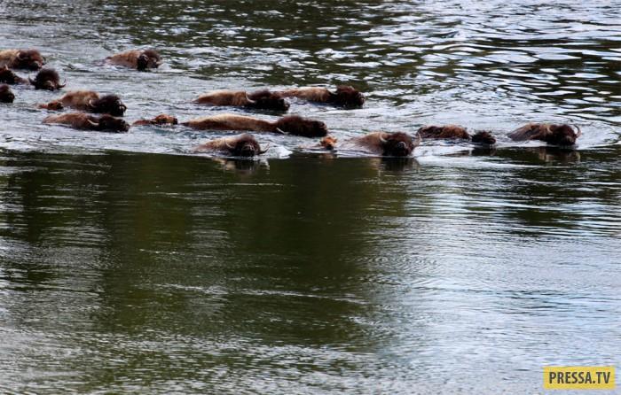 Самые интересные и красивые достопримечательности парка Йеллоустоун (41 фото)
