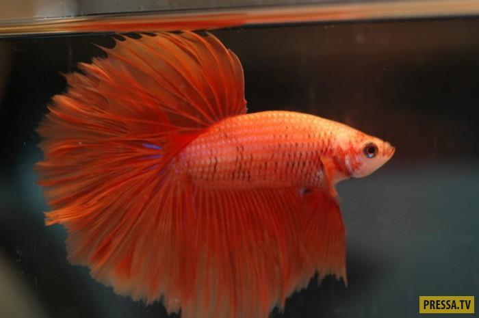 ТОП-25 симпатичных созданий природы красного цвета (25 фото)