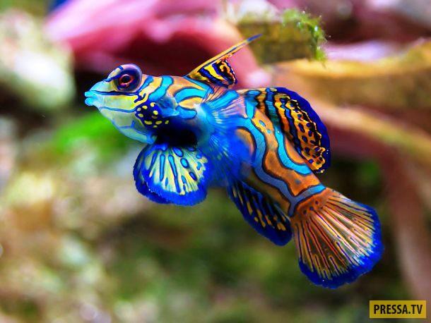 ТОП-15 жителей океана удивительной красоты