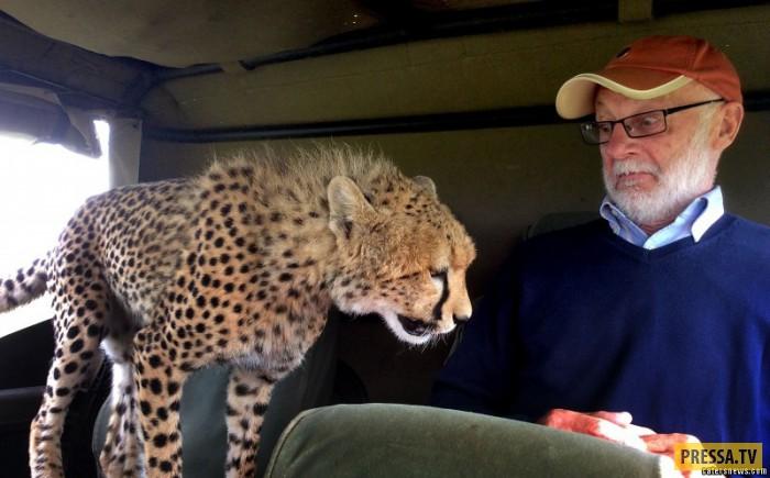 гепардами знакомство с