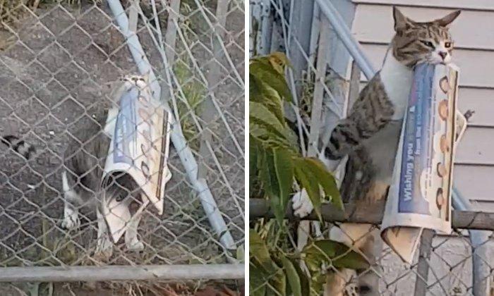 Кот ворует у соседей газеты