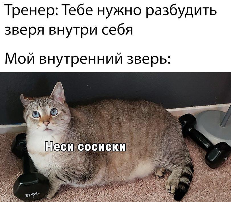 Смешные Анекдоты До Слез Про Животных