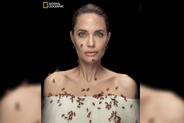 В честь Всемирного Дня пчел Анджелина Джоли в опасной фотосессии с 60 000 пчел