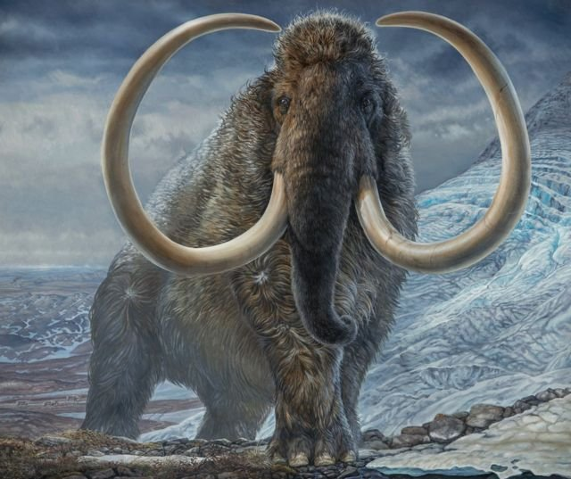 Детеныши шерстистых мамонтов появятся к 2027 году