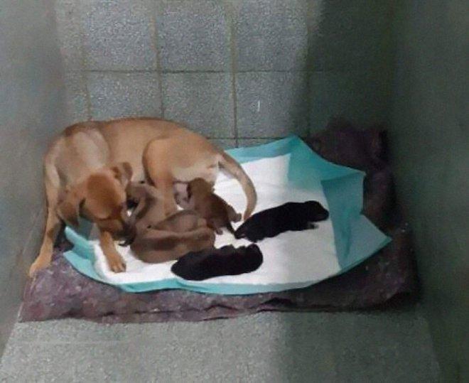 Собака пошла рожать в ветеринарную клинику, а пес - отец детей, ждал на улице