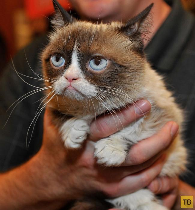 Пятница картинки, смешные картинки животных приколы кошки