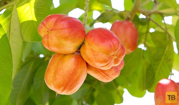 Топ 10: Экзотические фрукты, которые пробовали далеко не все (10 фото)