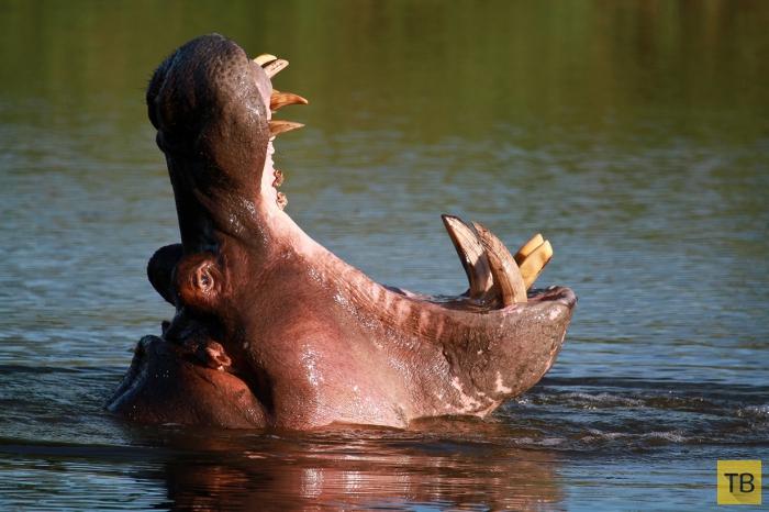 Интересные и познавательные факты о животном мире (17 фото)