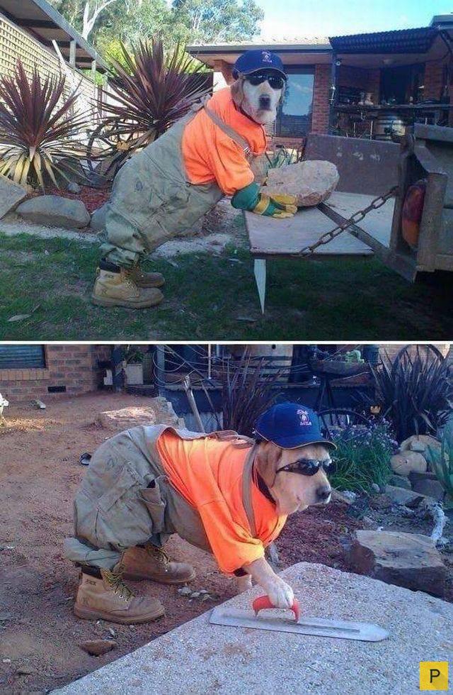 смешные фото со строителями солнце