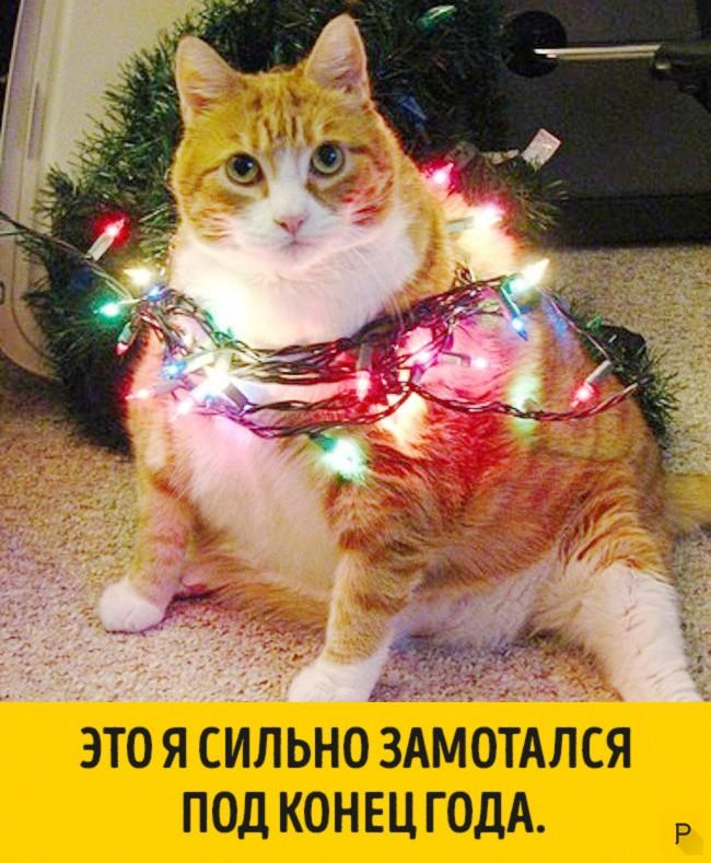 В ожидании нового года картинки прикольные