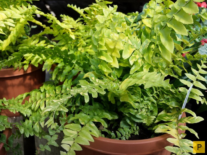 Топ 10: Растения, полезные для дома (10 фото)
