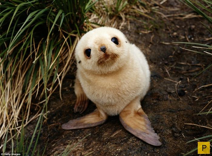Самые милые детеныши животных и места их обитания (15 фото)