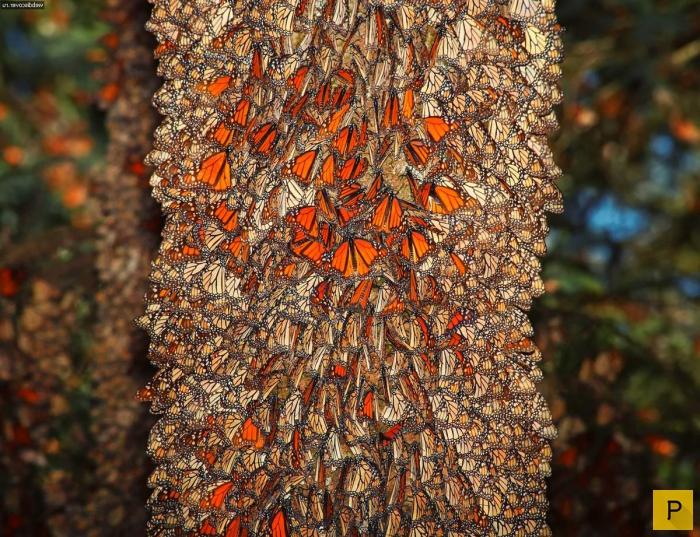 Топ 10: Самая яркая окраска в животном мире (10 фото)