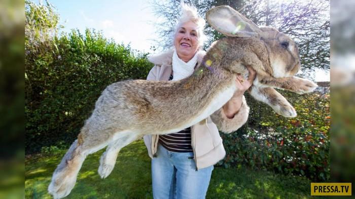 Топ 10: Животные, аномально-больших размеров (11 фото)