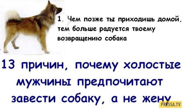 ТОП-13 причин почему собака, лучше чем жена (13 фото)