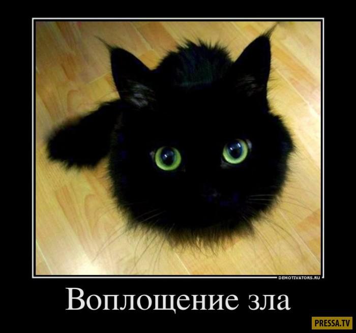 Демотиватор кошка я злая