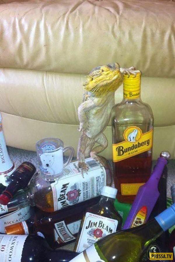 Люблю своего, картинки про пьянки прикольные фото