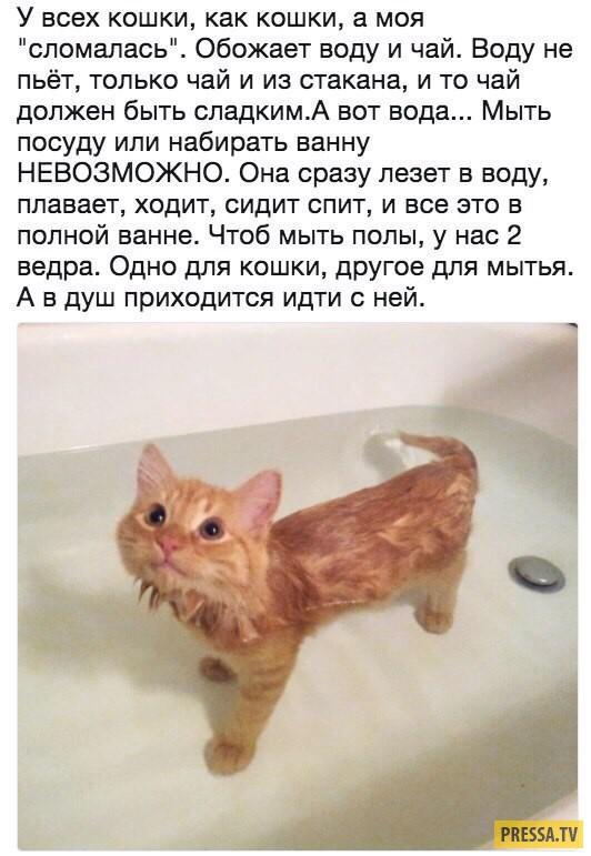 Надписью как, прикольные картинки с кошками и надписями ржачные для поднятия настроения