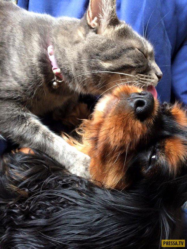 Картинки дружба котов с собаками