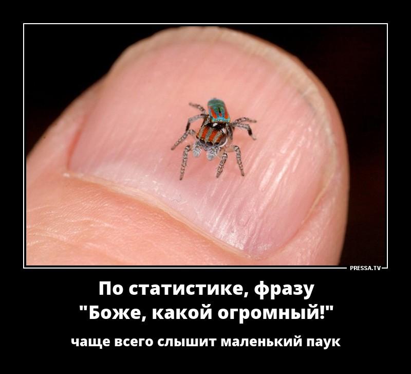 тем, демотиваторы про паук начала давайте
