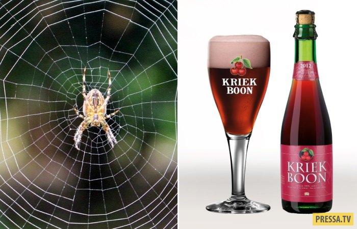 Знаменитое бельгийское пиво и пауки (8 фото)