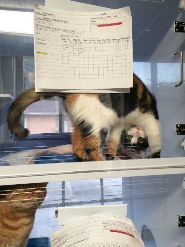 Картинки днем, картинки кукусики прикольные с котиками