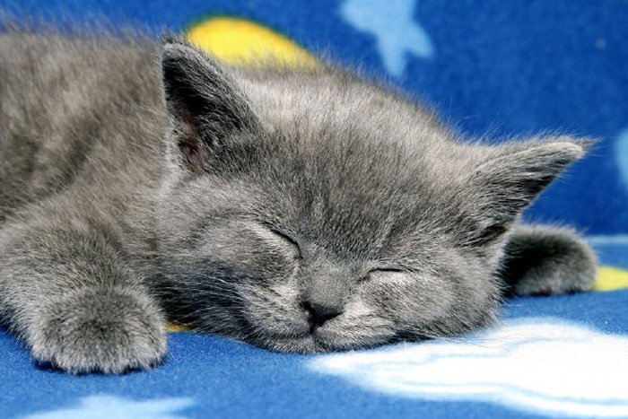 Споки коты картинки