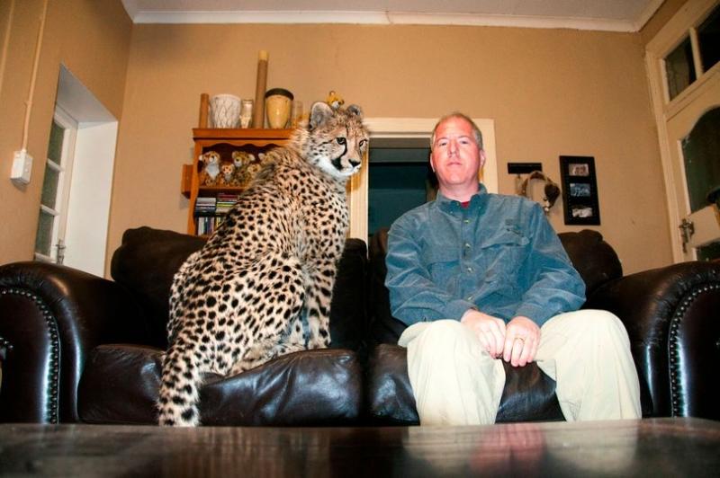 Встреча волонтера и выращенного им гепарда через год