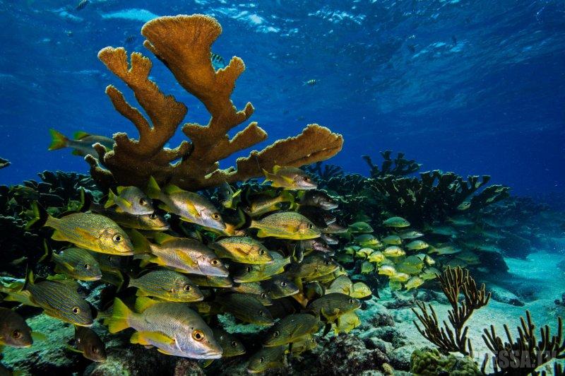 Сказочный подводный мир у берегов Кубы