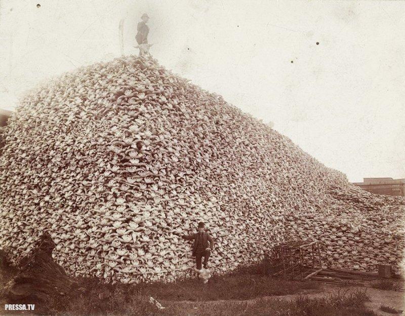 История одной фотографии: гора черепов бизонов