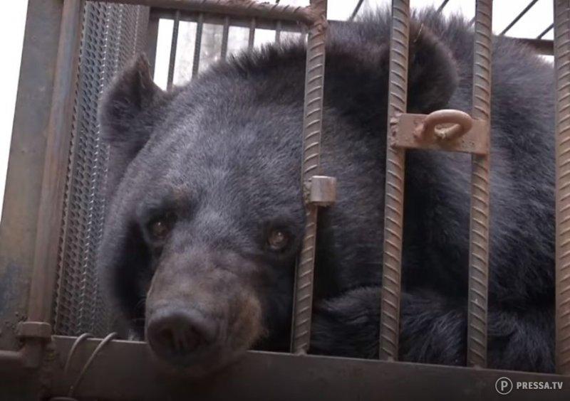 Китайской семье потребовалось два года, чтобы понять - их питомец не собака, а медведь!