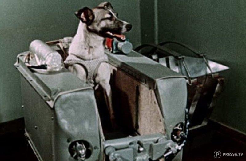 Картинка первая собака в космосе лайка
