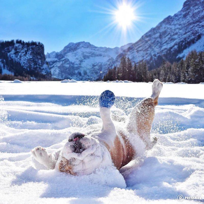 визуального морозное утро картинки прикольные любовь