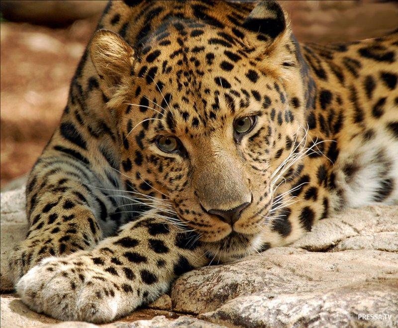 Топ 13: Редкие животные на грани исчезновения