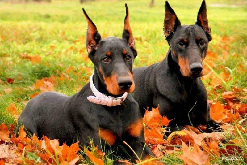 Топ 10: Самые вредные продукты для собаки