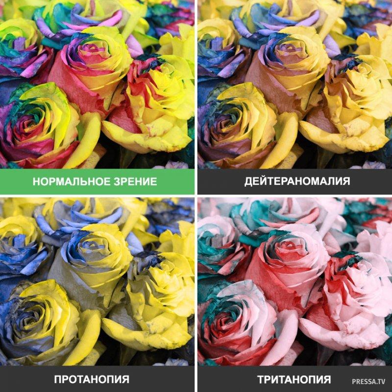 Картинки красивые виды санкт петербурга нашем разделе