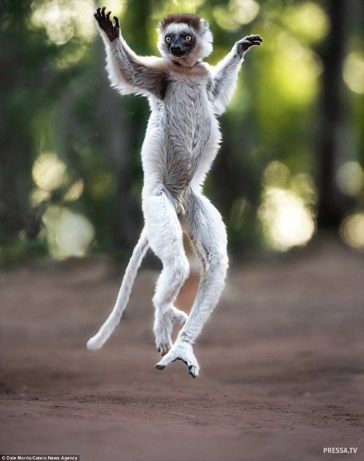 весенние танцы животных картинки приносит косметические