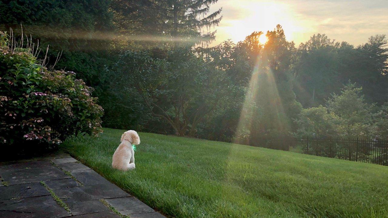 Утренний позитив фото