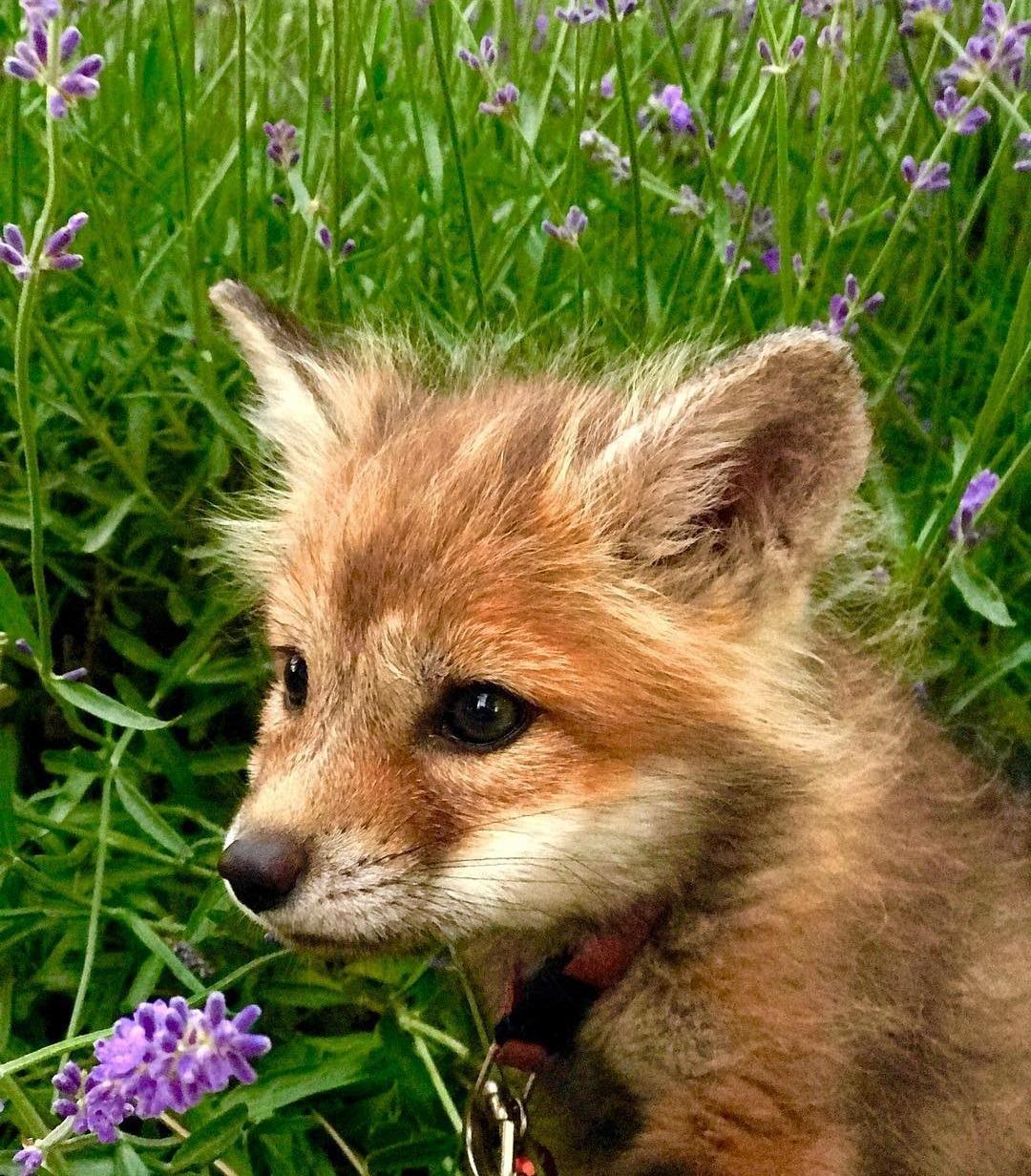 картинки с лисичками милые прикольные