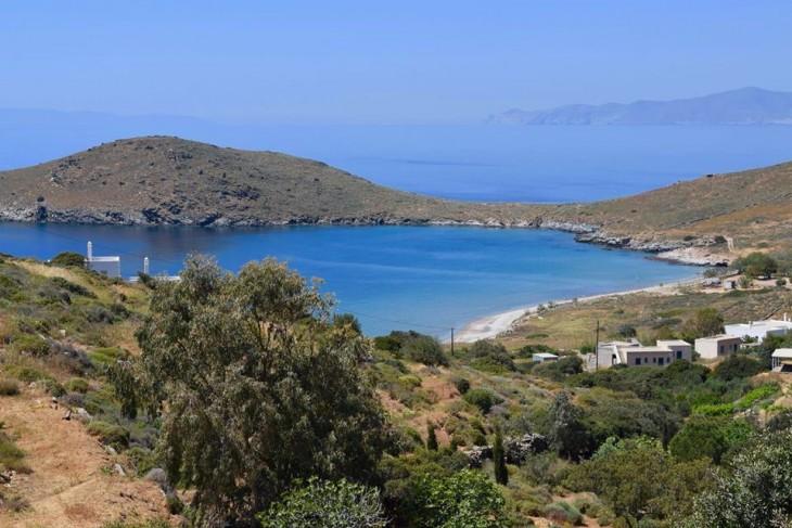 Работа мечты в Греции: Кошачий приют ищет управляющего